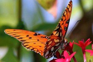 symbolisme animal ; Mon Carré de Sable : Le papillon