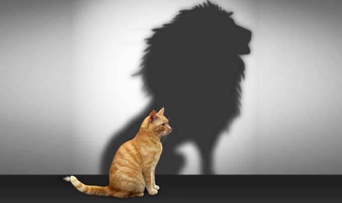echelle-de-l'estime-de-soi-de-Rosenberg Chat-lion