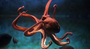 L'adn de la pieuvre